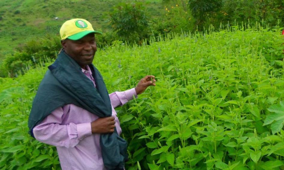 organic-chia-tanzania